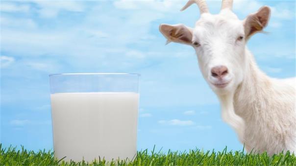 Bubs山羊奶配方奶粉进驻美国市场 盘中飙涨两成